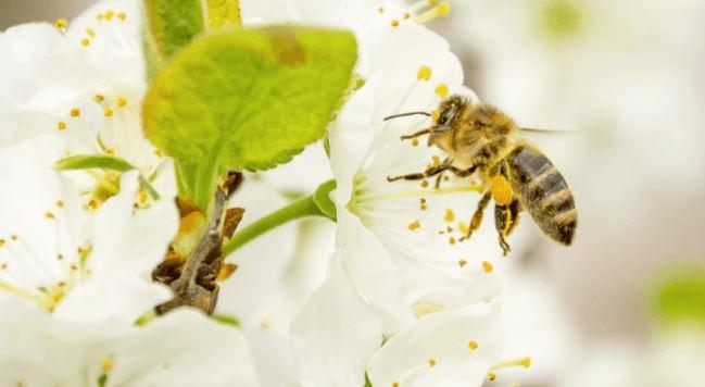 méheket teszünk a péniszre merevedéssel a herék megduzzadnak